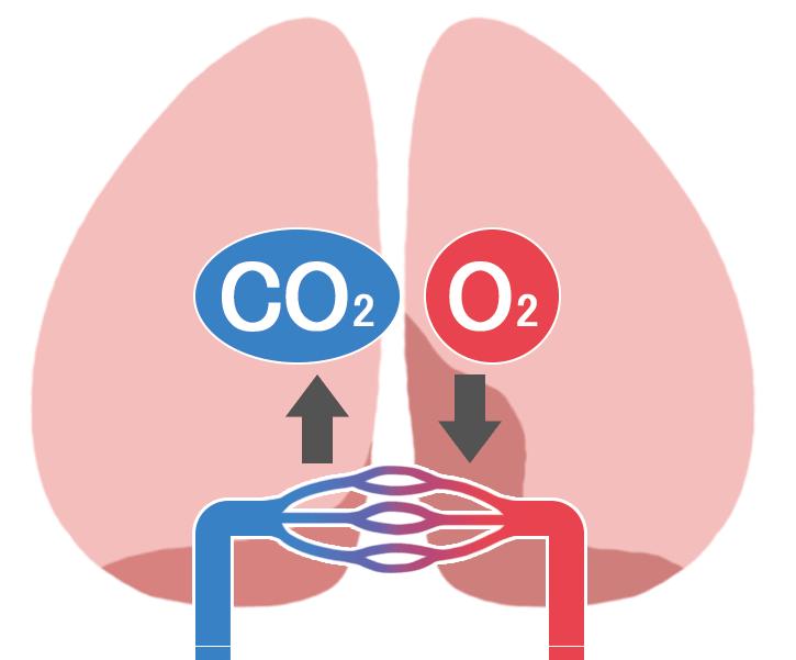 肺 ガス交換